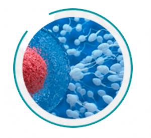 Urotrin - kā lietot - lietošana - sastāvs